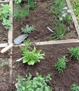 Garden organization