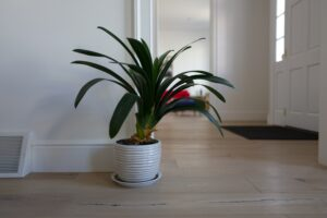 How to Maintain Houseplants